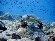 Sports & Activities - Sun Island Resort & Spa Maldives
